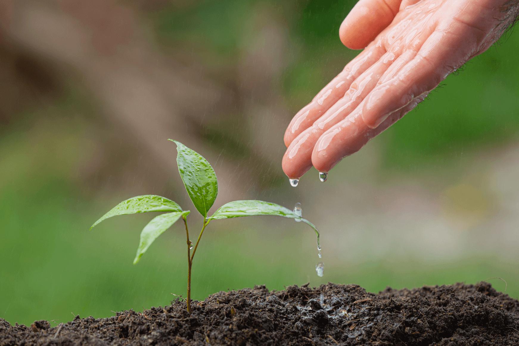 plante qui pousse